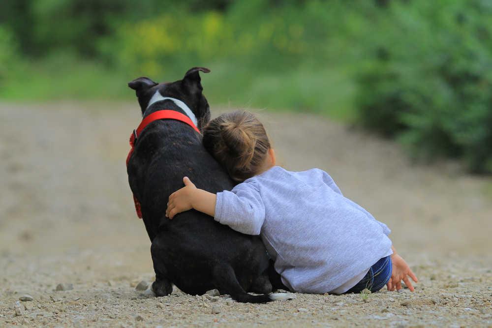 Enfermedades provocadas por los animales